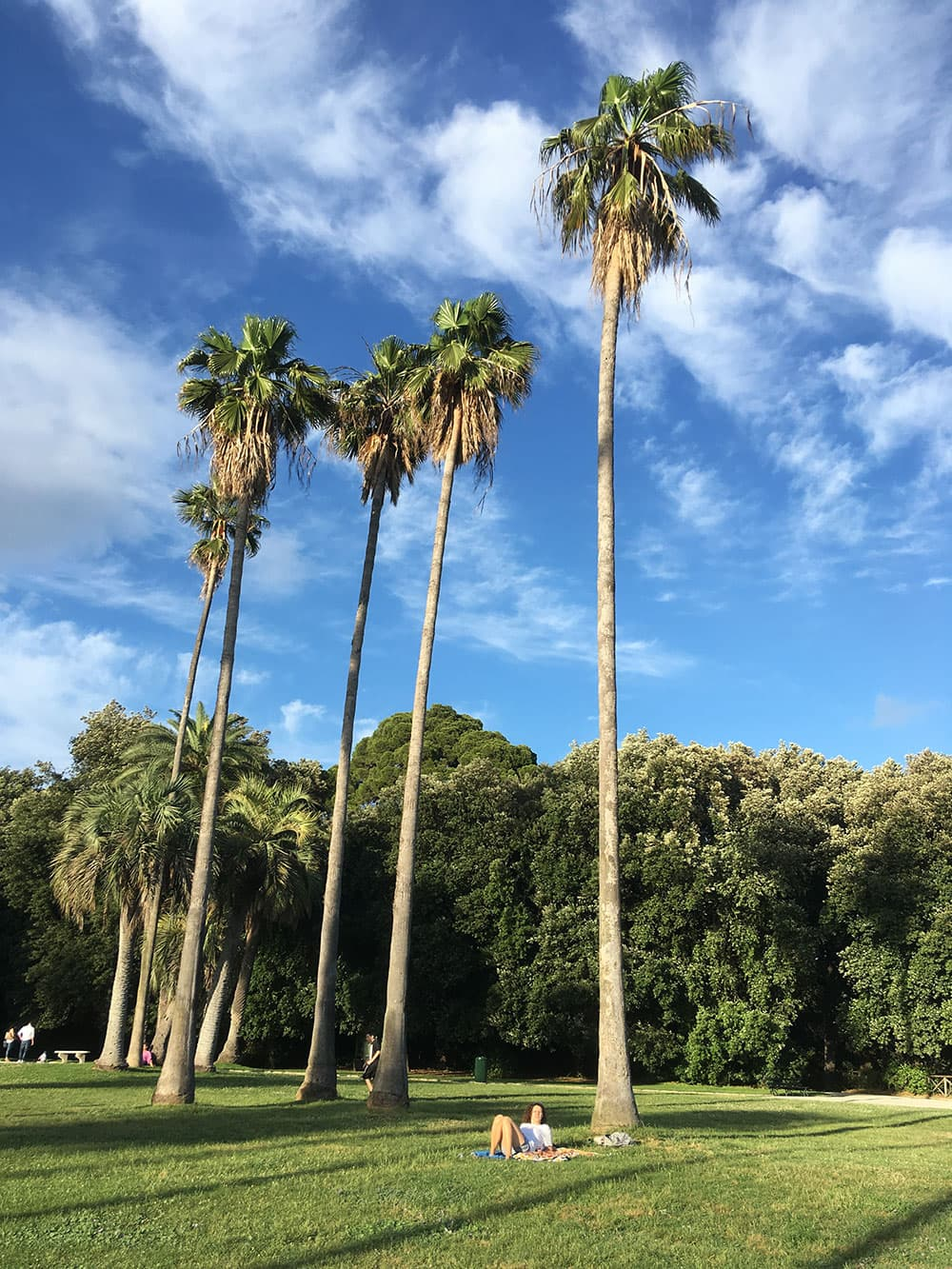 Tall trees in the Royal Park at Capodimonte